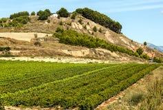 Wijngaarden in La Rioja royalty-vrije stock foto