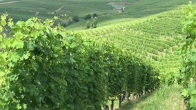 Wijngaarden, Langhe Piemonte - Italië stock videobeelden