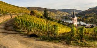 Wijngaarden in Merl, Duitsland, in de herfst Stock Afbeeldingen