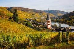 Wijngaarden in Merl, Duitsland, in de herfst Stock Foto