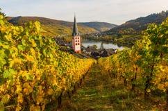 Wijngaarden in Merl, Duitsland, in de herfst Royalty-vrije Stock Foto's