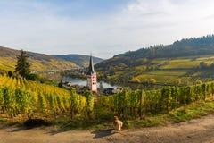 Wijngaarden in Merl, Duitsland, in de herfst Stock Foto's