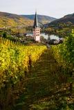 Wijngaarden in Merl, Duitsland, in de herfst Royalty-vrije Stock Fotografie