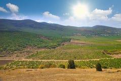 Wijngaarden met de bergen op de achtergrond royalty-vrije stock afbeeldingen
