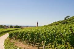 Wijngaarden met weg Stock Afbeeldingen
