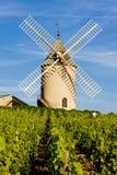 Wijngaarden met windmolen, Frankrijk royalty-vrije stock foto