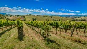 Wijngaarden in Montefalco - Umbrië - Italië Royalty-vrije Stock Foto's
