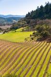 Wijngaarden in Napa, Californië. Royalty-vrije Stock Afbeeldingen
