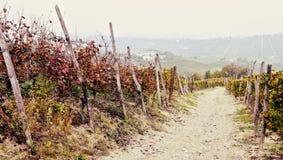 Wijngaarden in oktober Stock Foto's