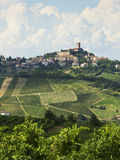 Wijngaarden in Oltrepo Pavese (Italië) Stock Foto's