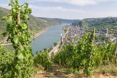Wijngaarden op de hellingen van rivier Rijn boven Oberwesel Stock Foto's