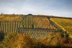 Wijngaarden op de heuvels royalty-vrije stock foto's