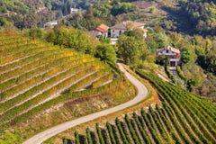 Wijngaarden op de heuvels in Piemonte, Italië Stock Foto