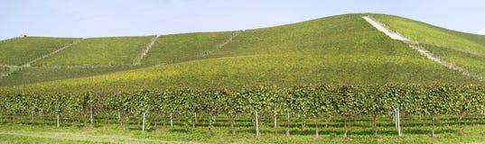 Wijngaarden op de heuvels van Langhe Stock Foto