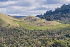 Wijngaarden op de heuvels van Sonoma-Provincie, Californië royalty-vrije stock foto's
