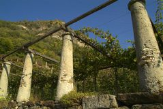 Wijngaarden op de oude die weg via Francigena wordt geroepen Royalty-vrije Stock Foto's