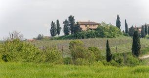Wijngaarden op Toscaanse Heuvel Stock Foto