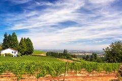 Wijngaarden in Oregon stock foto's