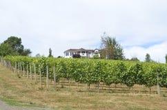 Wijngaarden in Oregons-Wijnland Stock Foto