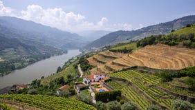 Wijngaarden, Portugal Stock Foto