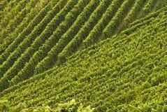 Wijngaarden, regelmatige patronen. Zwart Bos, Duitsland Royalty-vrije Stock Fotografie