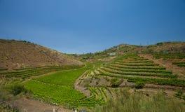 Wijngaarden rond Bandama Stock Afbeeldingen