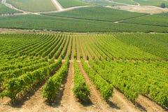 Wijngaarden in Sicilië Royalty-vrije Stock Fotografie
