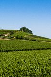 Wijngaarden, St Emilion, het gebied van Bordeaux, Frankrijk royalty-vrije stock afbeelding