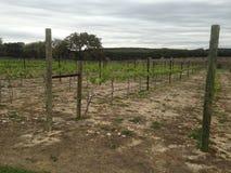Wijngaarden in Texas Royalty-vrije Stock Foto
