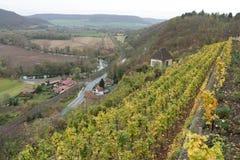 Wijngaarden in Thuringia Stock Foto's