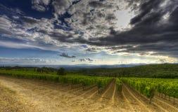 Wijngaarden in Toscanië Royalty-vrije Stock Foto's