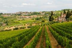 Wijngaarden in Toscanië stock afbeelding