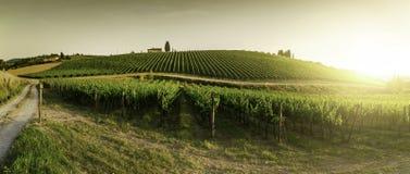 Wijngaarden in Toscanië Stock Fotografie