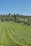 Wijngaarden in Toscanië Stock Afbeeldingen