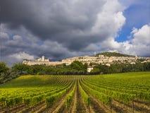 Wijngaarden in Toscanië, Italië Royalty-vrije Stock Foto