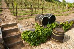 Wijngaarden in troja Royalty-vrije Stock Fotografie