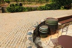Wijngaarden in troja Stock Afbeeldingen