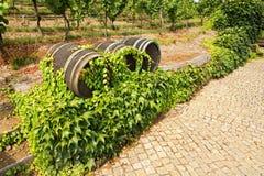 Wijngaarden in troja Royalty-vrije Stock Afbeelding