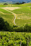 Wijngaarden van Beaujolais, Frankrijk Stock Foto's