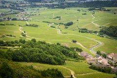 Wijngaarden van Beaujolais, Frankrijk Royalty-vrije Stock Foto