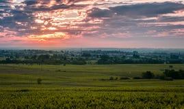 Wijngaarden van Beaujolais in zonsopgangtijd, Frankrijk Royalty-vrije Stock Foto's