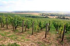Wijngaarden van Chablis Bourgondië, Frankrijk royalty-vrije stock foto