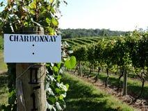 Wijngaarden van Chardonnay druiven Stock Foto's
