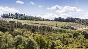 Wijngaarden van Chianti in Toscanië Stock Afbeeldingen