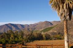 Wijngaarden van Chili stock afbeelding