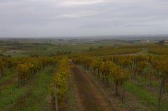 Wijngaarden van Cognac. Frankrijk. 1. Royalty-vrije Stock Afbeeldingen