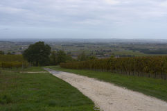 Wijngaarden van Cognac. Frankrijk. 2. Stock Foto