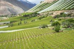 Wijngaarden van de Elqui-Vallei, het deel van de Andes van Atacama Royalty-vrije Stock Foto's