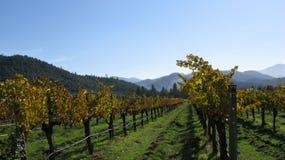 Wijngaarden van de Vallei Applegate Royalty-vrije Stock Foto's