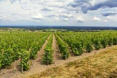 Wijngaarden van Fleurie-Dorp, Beaujolais, Frankrijk Stock Fotografie